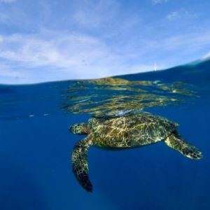 Turtle-Surface