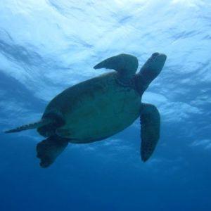 turtle - below