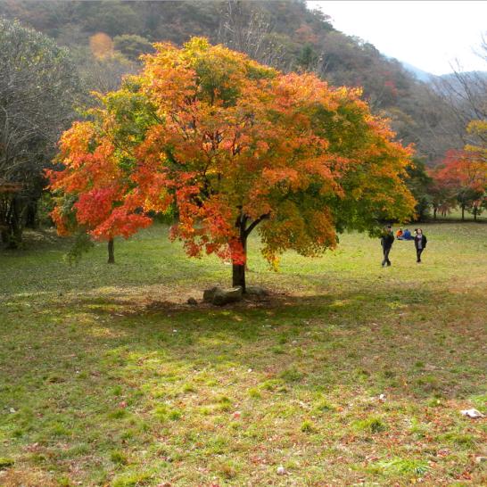 oa-2-harvest-tree