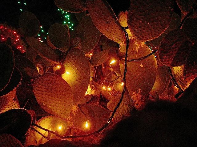 Texas Prickly Pear