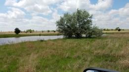 Pond in pasture