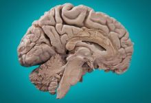 Photo of 5 uncommon facts about the human brain that will amaze you