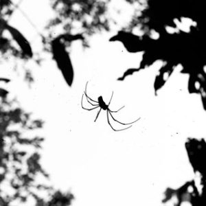 Groupe AZ Extermination exterminator spider