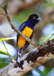 03_birdgallery