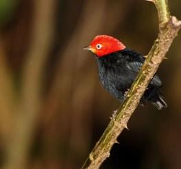 07_birdgallery