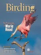 Birding Online: April 2017