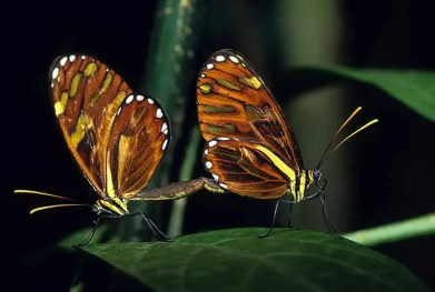 CR-heliconias