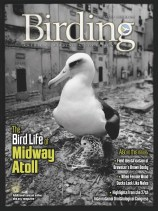 Birding Online: October 2018