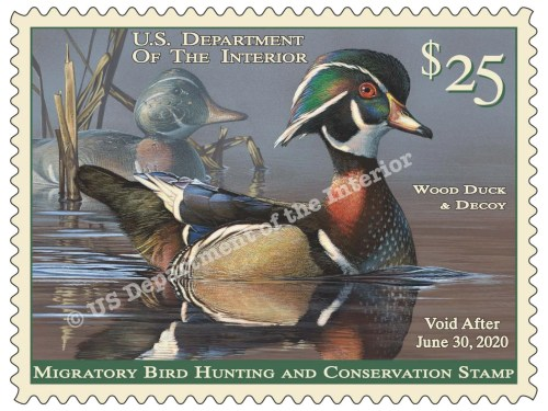 2019-2020 Duck Stamp art