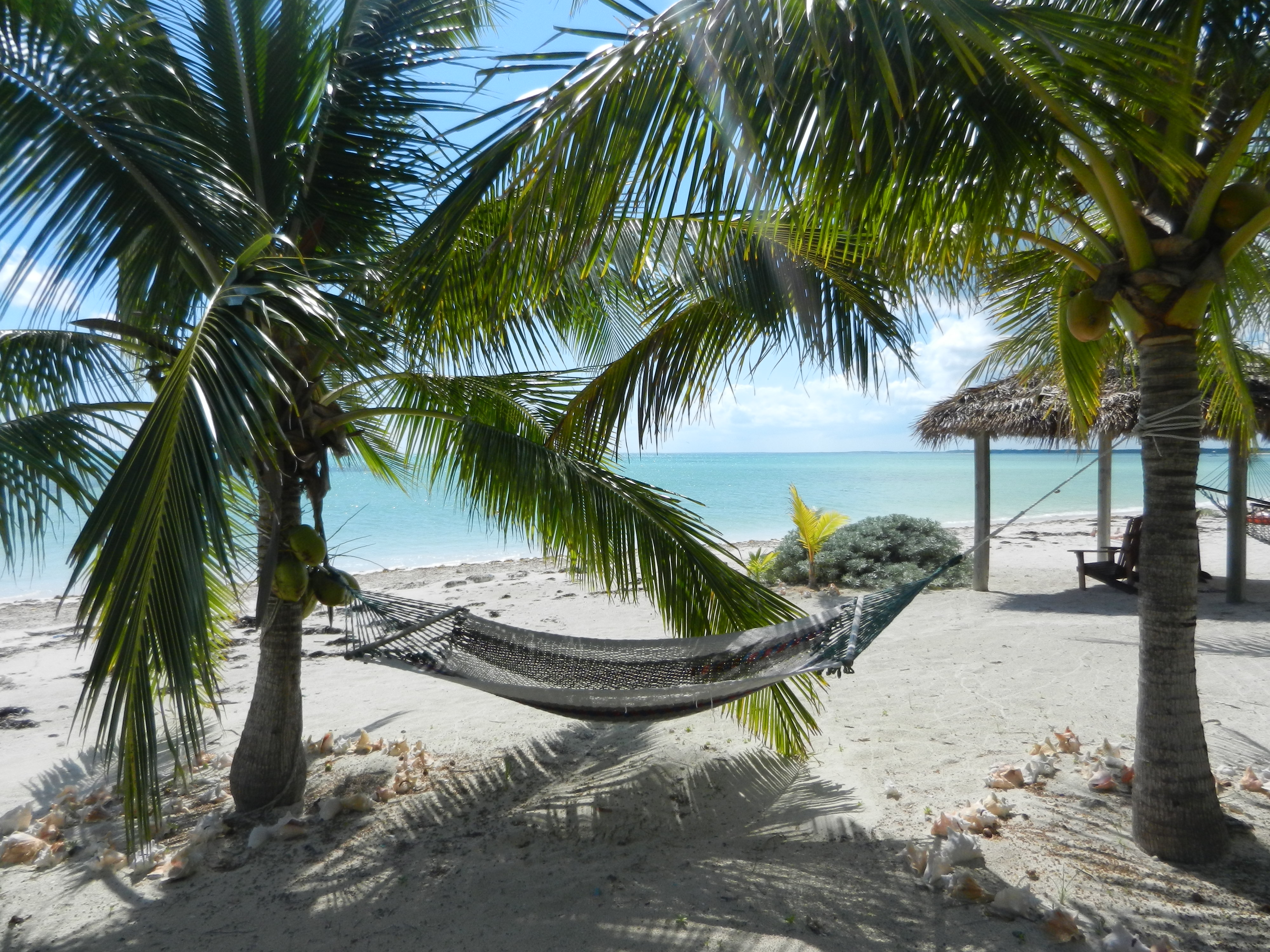 You can relax and enjoy the beach in the hammock under the coconut trees.