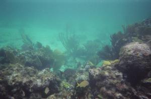 Reef at Casuarina Point (13)