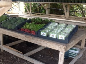 Produce display at the Driftwood Market