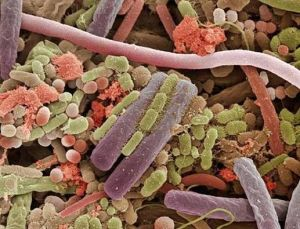 Imágenes asombrosas tomadas con un microscopio electrónico