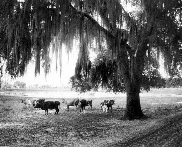 Courtesy of the Florida State Library & Archives, 1920s