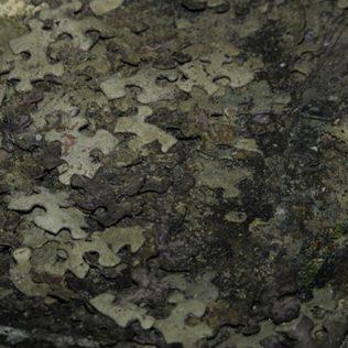 Mount Dora Catacombs | Photo © 2006 Richard Stayton