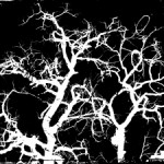 tree-silhouette-1427716-m