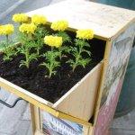 Verde! Guerrilla Gardening!