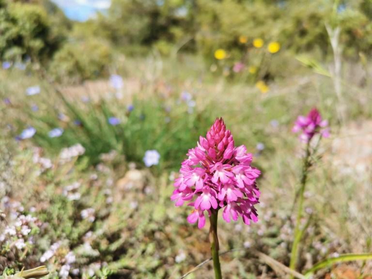Read more about the article La flore de Fontcaude en mai