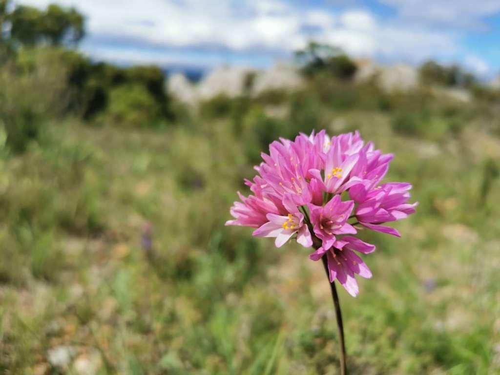 biodiversite-garrigue-occitanie-fontcaude