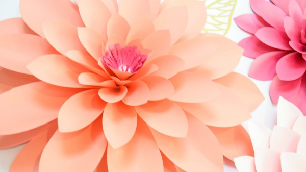 Gorgeous giant paper dahlias made with pink and orange paper.