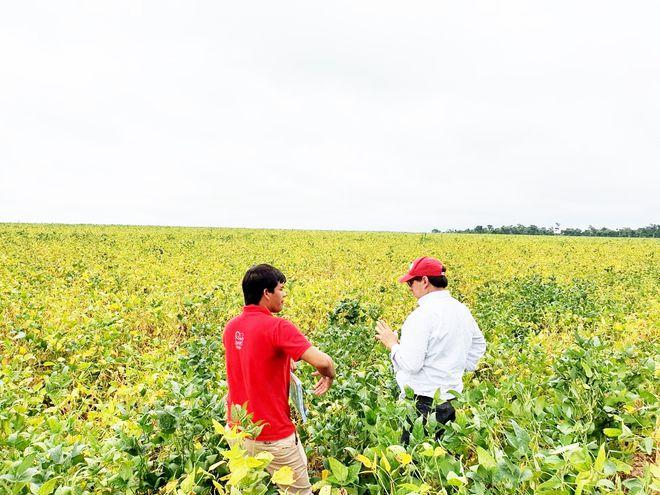 El Ing. Agr. Wilfrido Morel (con quepis), especialista fitopatólogo que trabaja para el Senave, ayer, con un asistente, durante una de las observaciones de campo,  para constatar la sanidad de las plantaciones de soja, en una parcela del sur del país.