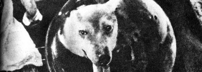 Laika, la perra que dio su vida para llevarnos al espacio