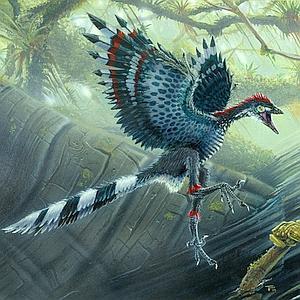 Las primeras aves, torpes como un pavo