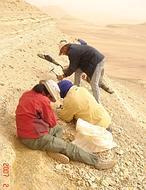 ¿Y si los antropoides no surgieron en África?
