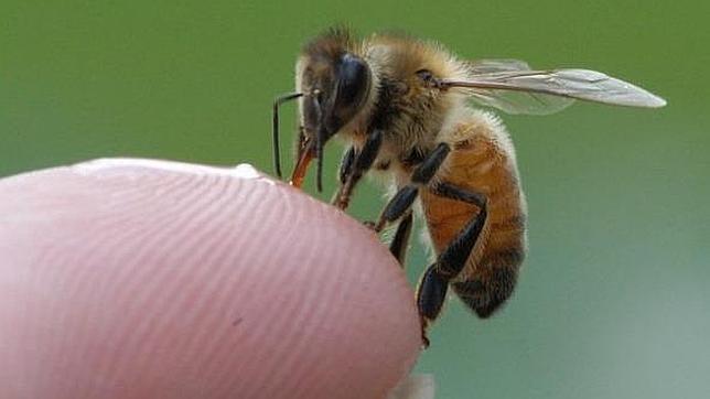 Los teléfonos móviles matan a las abejas