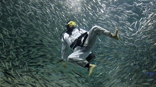 Peces «invisibles» rompen las leyes de la Física