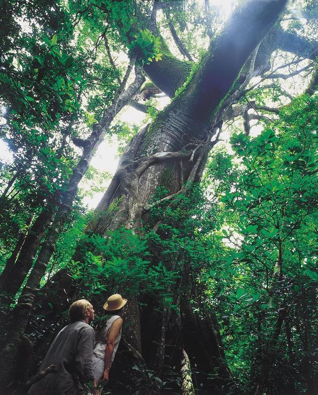 ¿Por qué los árboles no pueden crecer más de cien metros?