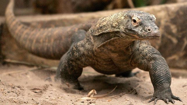El lagarto de Cuenca de tres metros