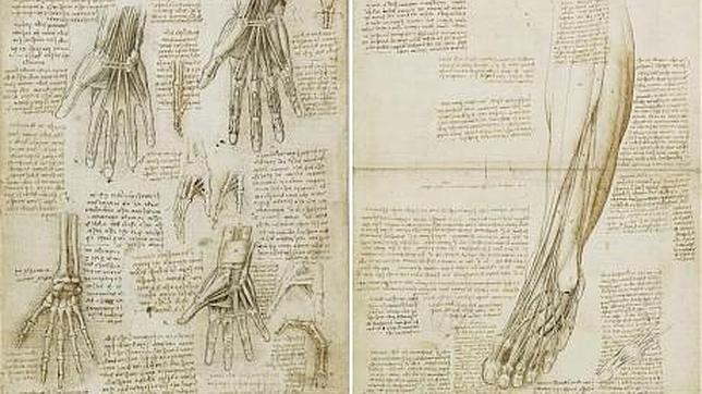 Leonardo da Vinci, un anatomista del siglo XXI