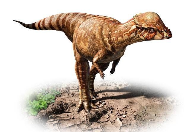 Descubren un pequeño dinosaurio cabezón