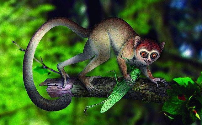 Encuentran al «padre» de todos los primates, incluido el hombre