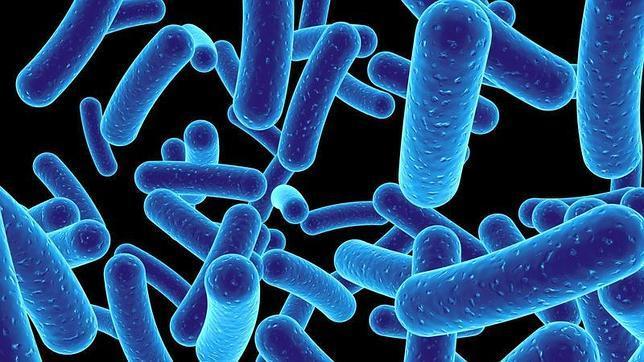 Descubren 200 microbios desconocidos que conviven con nosotros