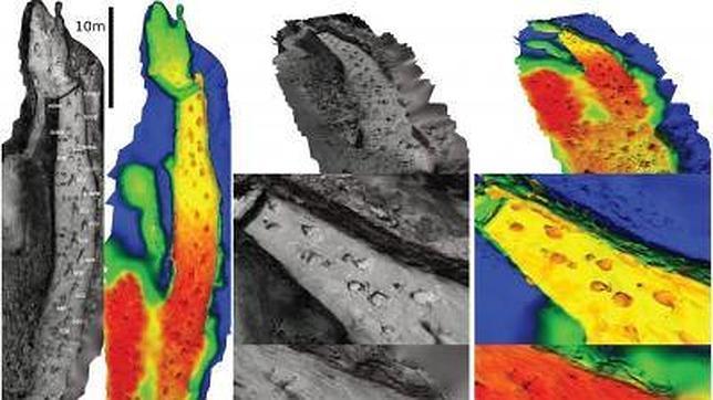 Reconstruyen una persecución de dinosaurios de hace 110 millones de años