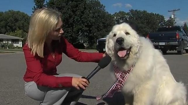El perro que fue elegido alcalde de un pueblo de Estados Unidos