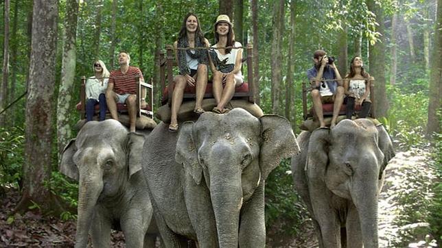 Resultado de imagem para elefante montado