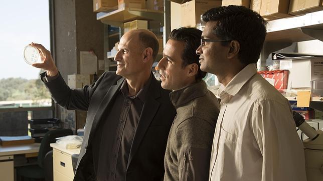 Científicos españoles manipulan por primera vez ADN de un embrión para curarlo