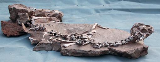 El fósil bien preservado del Tongtianlong o «Dragón de barro»