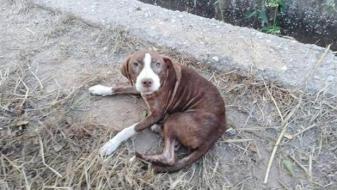 El perro que ha pasado la noche junto al anciano desaparecido en Burriana