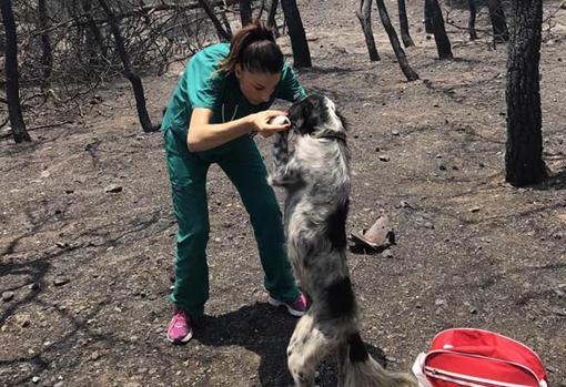 Vasiliki Stathopulu, veterinaria voluntaria atendiendo a un perro