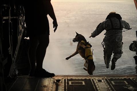 El perro que capturó a Bin Laden