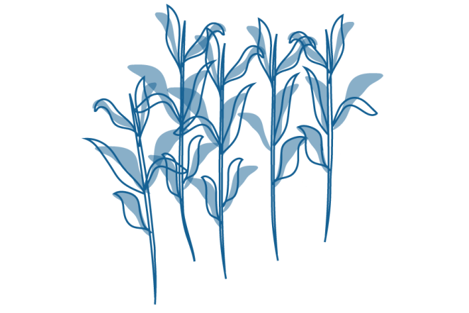 An illustration of a crop of wheat.
