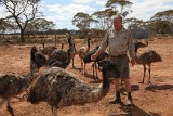 Wayne Piltz surrounded by emu's