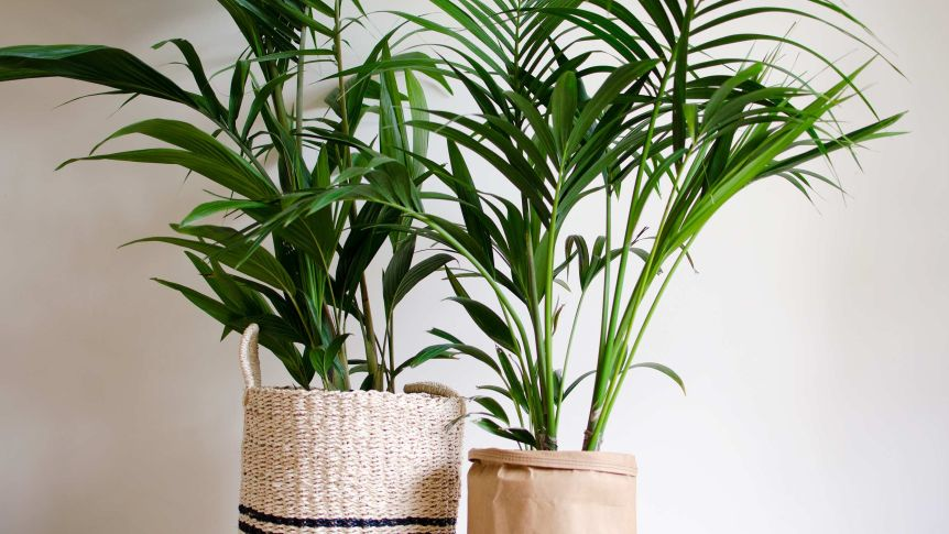 Indoor Plants That Will Purify The Air In Your Home Or Office