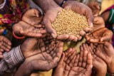 People holding out hands for some rice