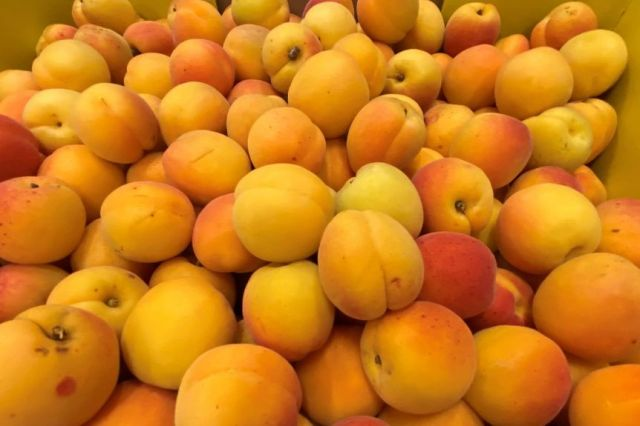 Yellow apricots in a box.