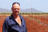 Farmer Leon Collins stands in front of a paddock of newly planted avocados at Lakeland